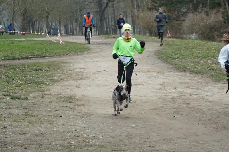 LOOMIS (chienne braque croisée) Dsc01012