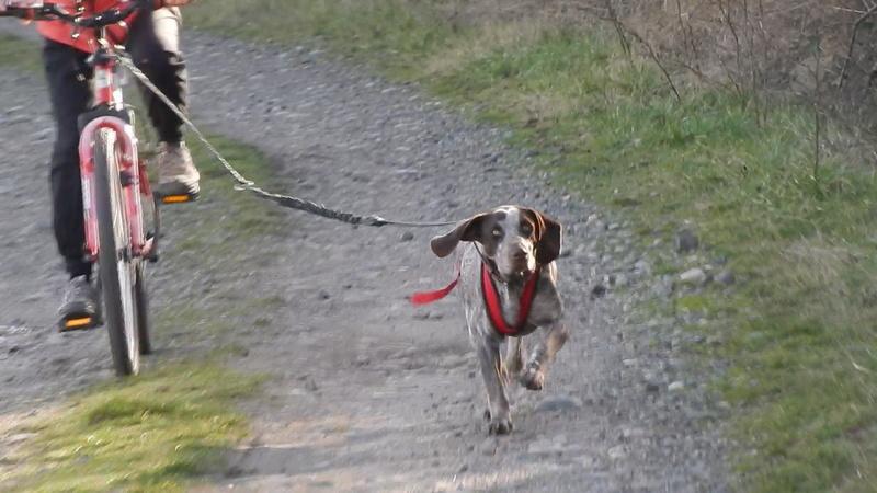 LOOMIS (chienne braque croisée) Dscn5111