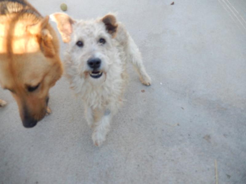BEN (mâle fox terrier) Dscn6413
