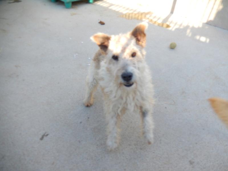 BEN (mâle fox terrier) Dscn6414
