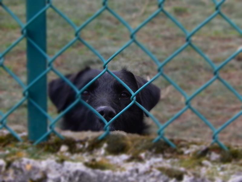 PLUTO (croisé griffon mâle) Fscn6413
