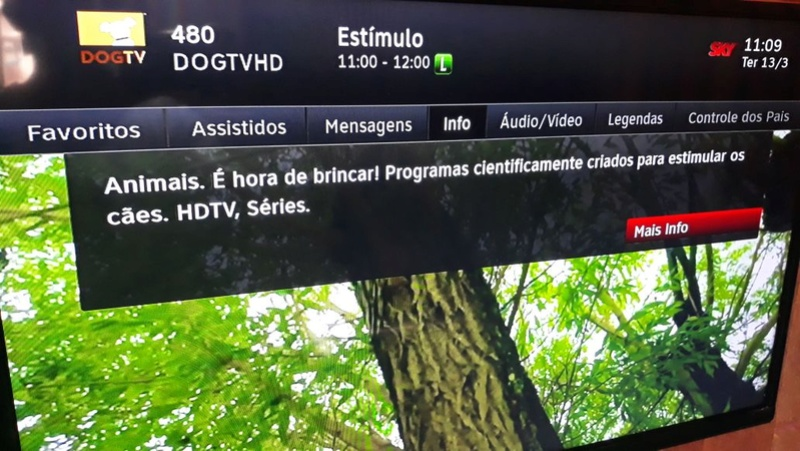 Aproveite o sinal aberto do canal DogTV Yndice10