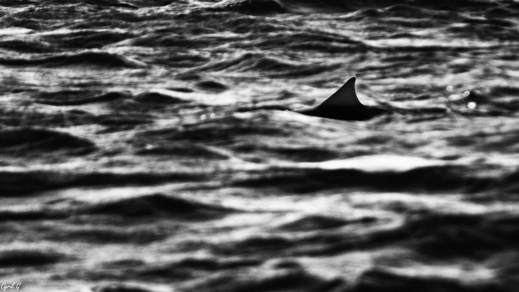Les dents de la mer Imgp2310