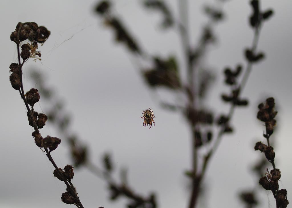 Petite araignée Imgp5814