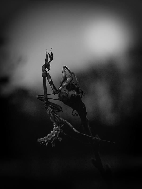 Darkness Triumphant Imgp9520