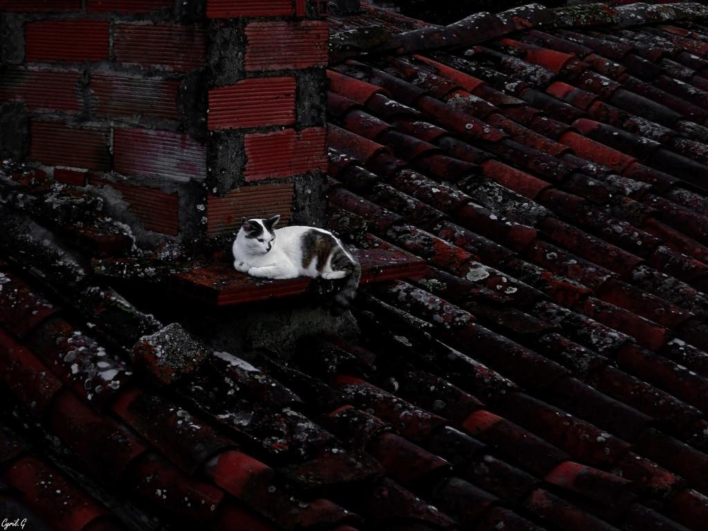 Le seigneur des toits P1000411