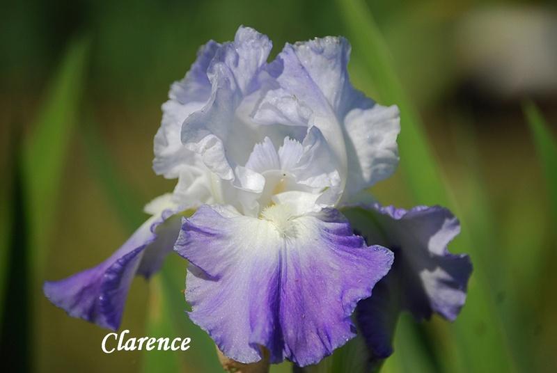 Ma collection d'iris 13-cla10