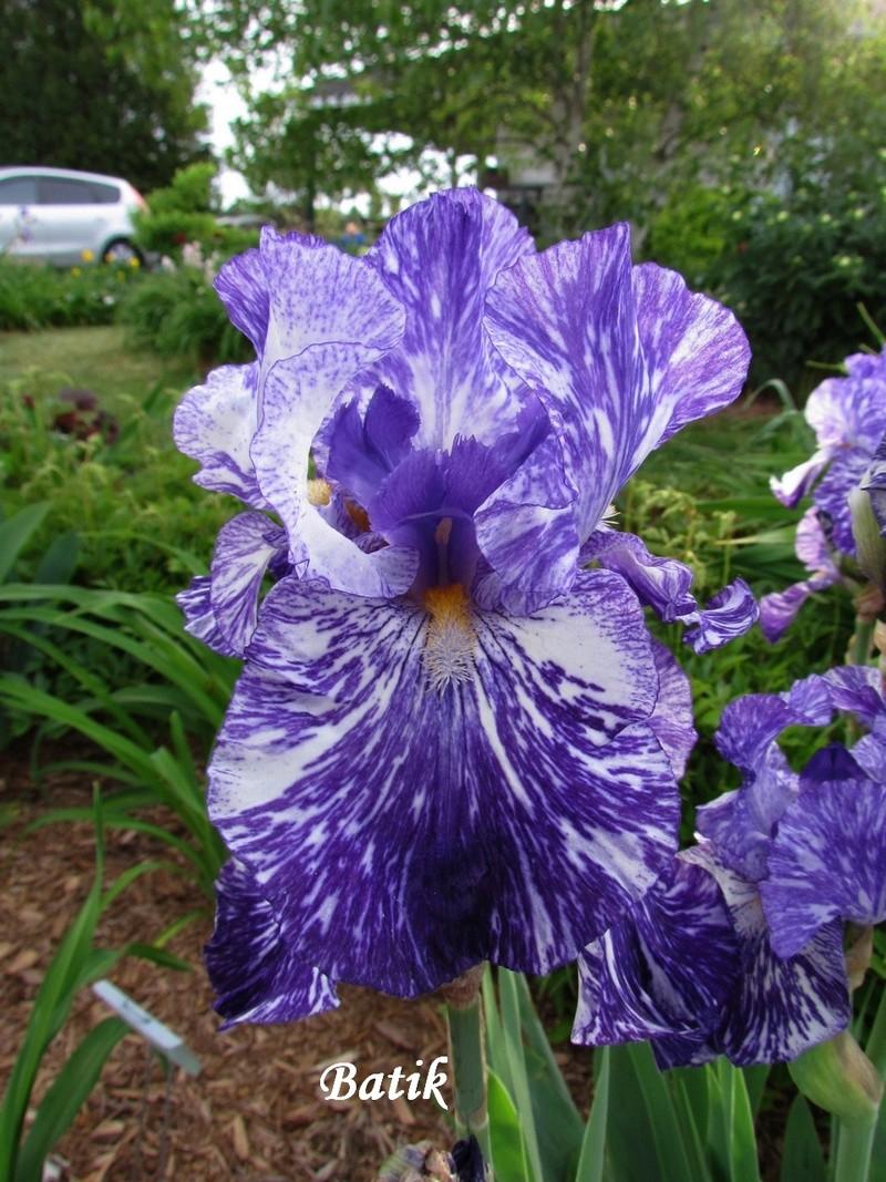Ma collection d'iris 5-bati11