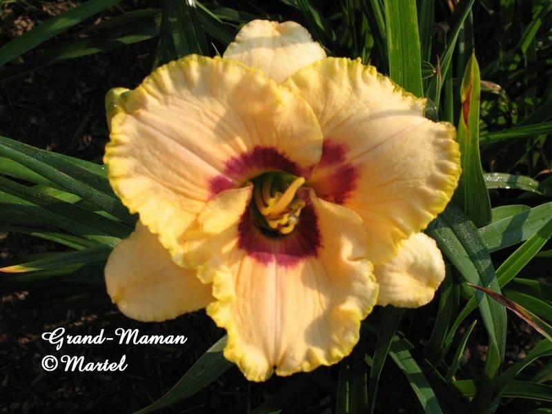 Mes hybrides: semis 2007 encore au jardin. 7255_g10