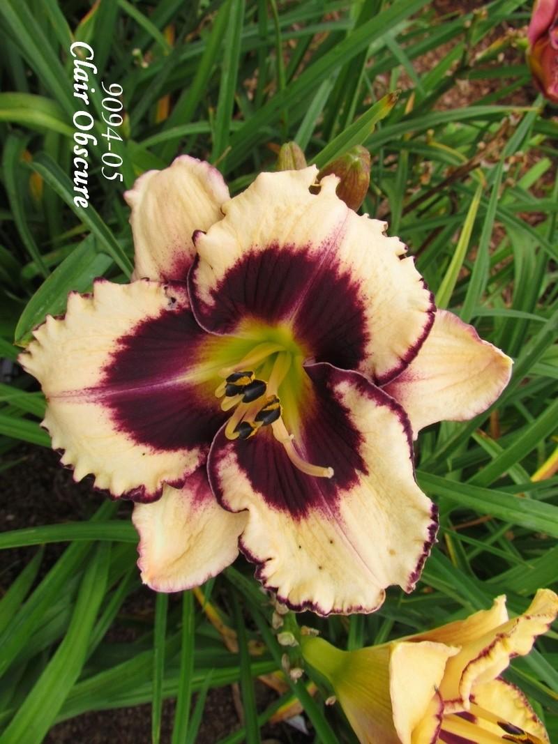Mes hybrides: semis 2009 encore au jardin. 9094-010