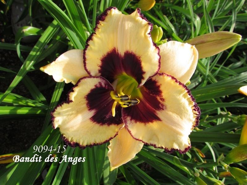 Mes hybrides: semis 2009 encore au jardin. 9094-112