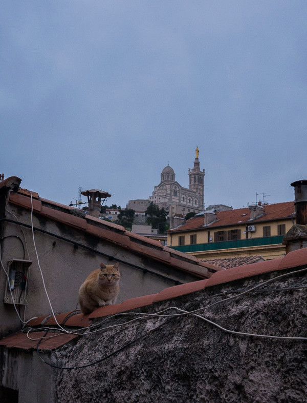 Matou sur les toits Le_mat10
