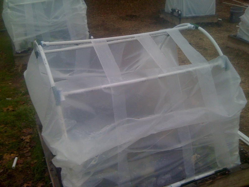 cold frame gardening question Img_0617
