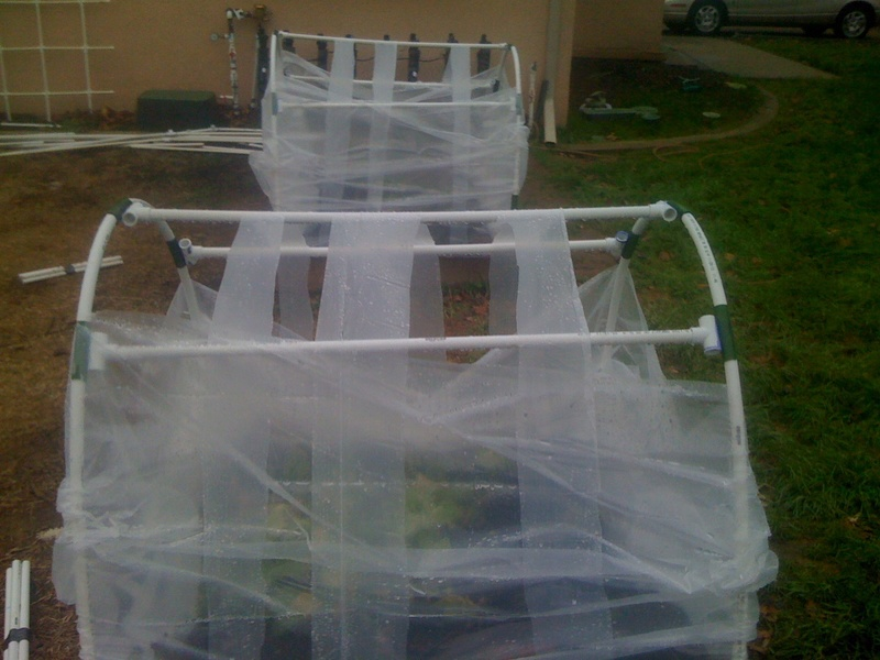 cold frame gardening question Img_0618