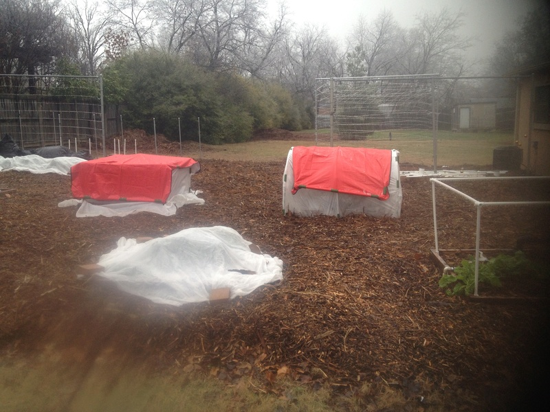 cold frame gardening question Img_0720