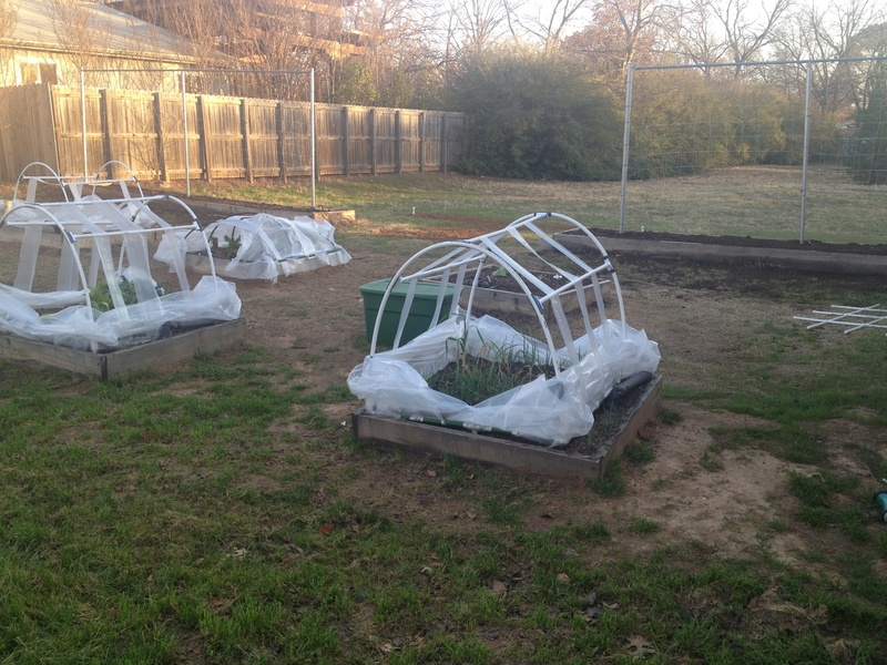 cold frame gardening question Img_0723