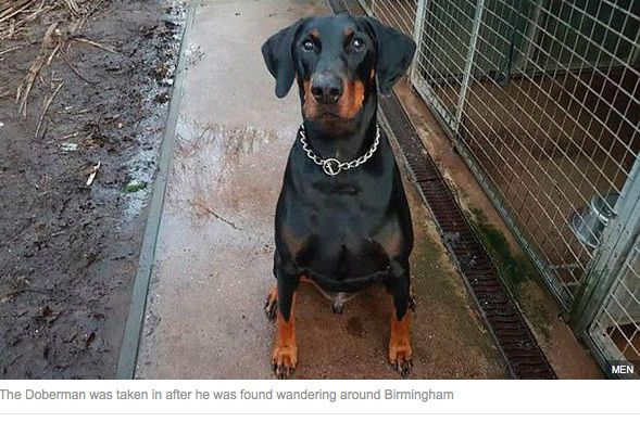 Mystery of dog who travelled 113 MILES on train and even changed at Manchester Screen11