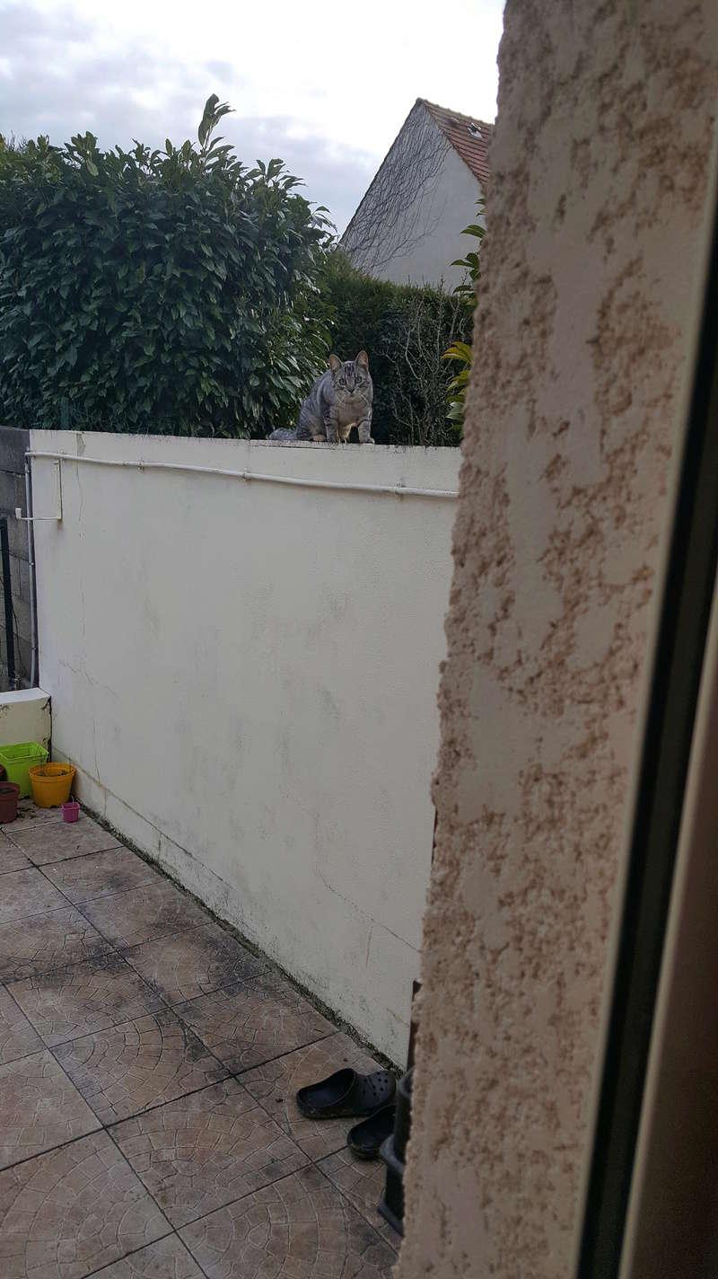 Tiens un chaton/chat dans le jardin pas l'habitude^^ lol 20180334