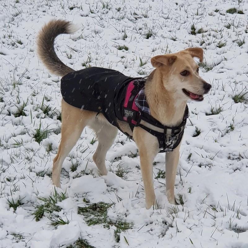 Bildertagebuch -  Holly: junges und lebensfrohes Hundemädchen sucht ihr Zuhause...VERMITTELT! 20171212