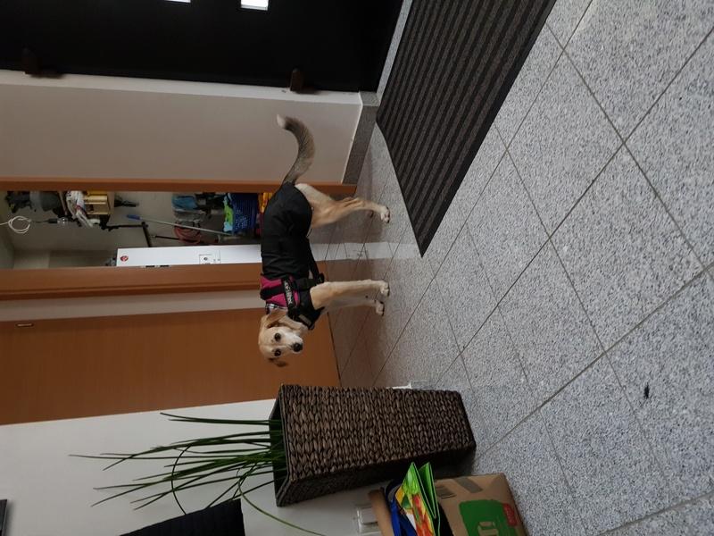 Bildertagebuch -  Holly: junges und lebensfrohes Hundemädchen sucht ihr Zuhause...VERMITTELT! 20171214