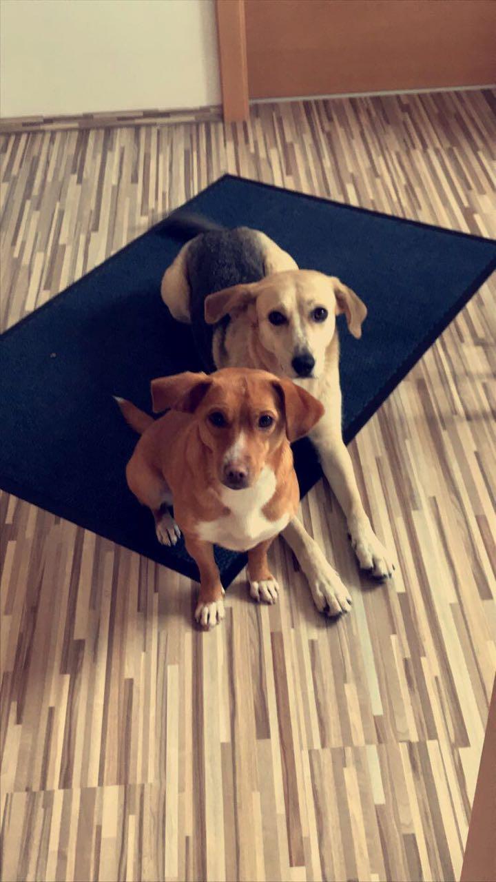 Bildertagebuch -  Holly: junges und lebensfrohes Hundemädchen sucht ihr Zuhause...VERMITTELT! Img-2011