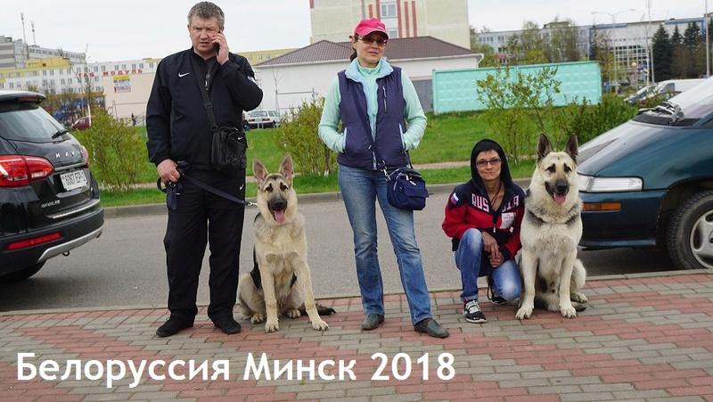 ВОСТОЧНО-ЕВРОПЕЙСКАЯ ОВЧАРКА ВЕОЛАР НАРСЕ Dsc00427