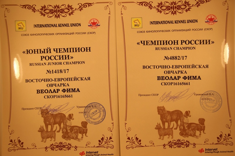 ВОСТОЧНО-ЕВРОПЕЙСКАЯ ОВЧАРКА ВЕОЛАР ФИМА Img_6015