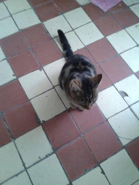 SOS pour jeune chat en danger 22834410