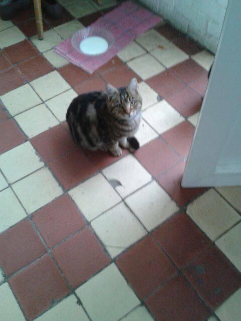 SOS pour jeune chat en danger 22883410