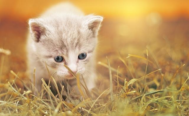 Salut les amis II Cat-1910