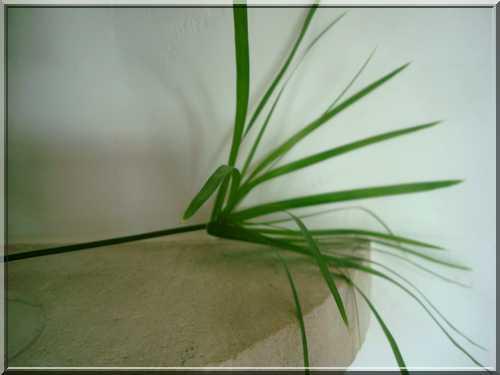 Une plante qui aime l'eau  126