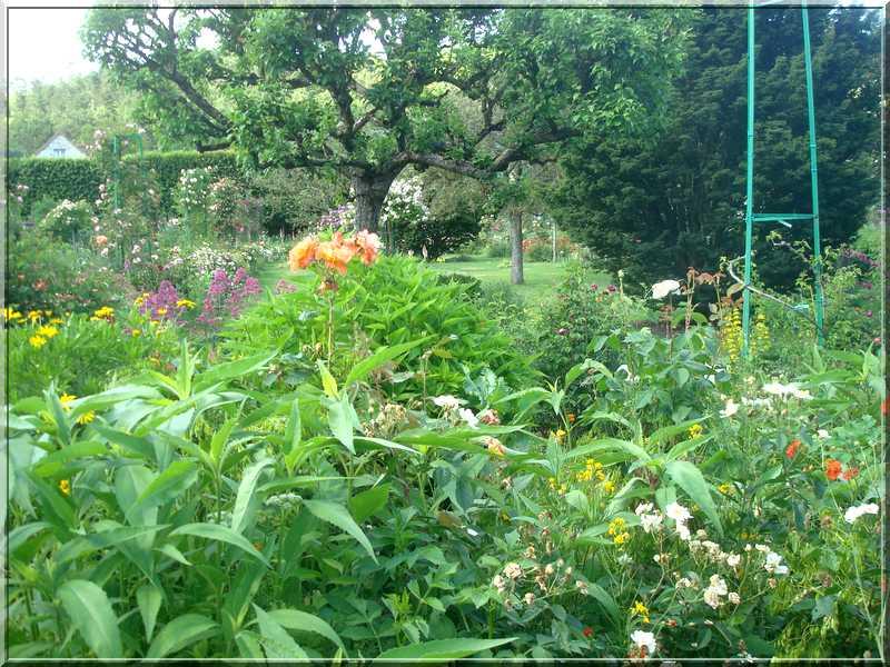 Giverny : des couleurs, des senteurs, des fleurs ! 2212