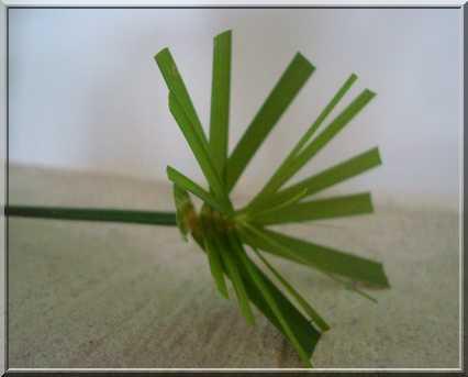 Une plante qui aime l'eau  227