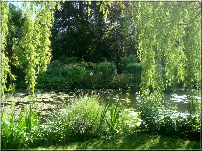 "Le ""Jardin d'Eau"" second jardin de Claude Monet 3110"