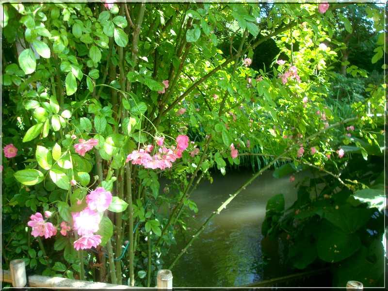"Le ""Jardin d'Eau"" second jardin de Claude Monet 3411"