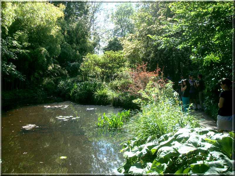 "Le ""Jardin d'Eau"" second jardin de Claude Monet 3511"