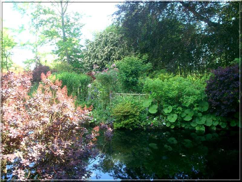 "Le ""Jardin d'Eau"" second jardin de Claude Monet 3711"