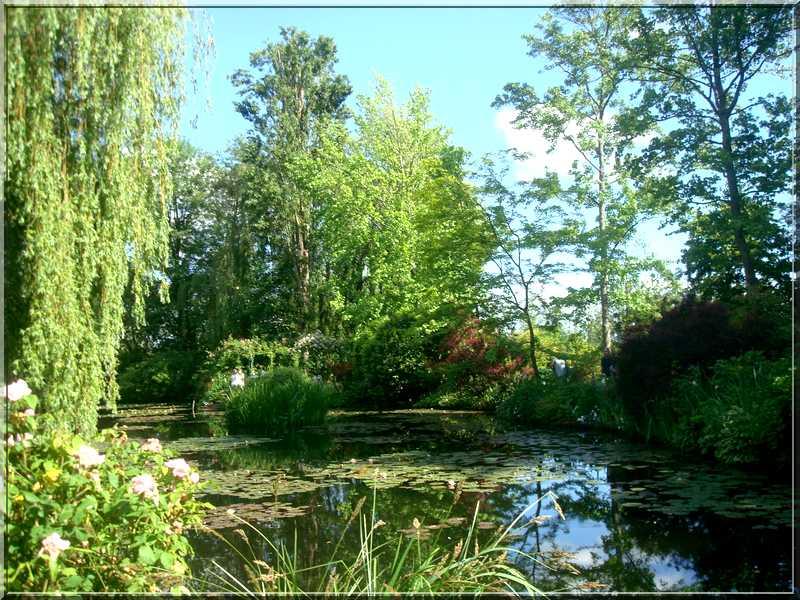 "Le ""Jardin d'Eau"" second jardin de Claude Monet 3811"