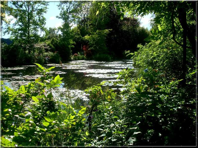 "Le ""Jardin d'Eau"" second jardin de Claude Monet 4012"