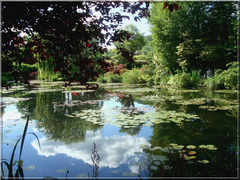 "Le ""Jardin d'Eau"" second jardin de Claude Monet 4213"