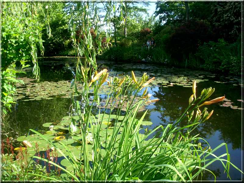 "Le ""Jardin d'Eau"" second jardin de Claude Monet 4411"