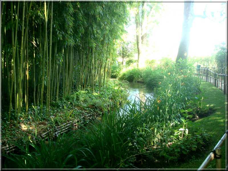 "Le ""Jardin d'Eau"" second jardin de Claude Monet 5111"