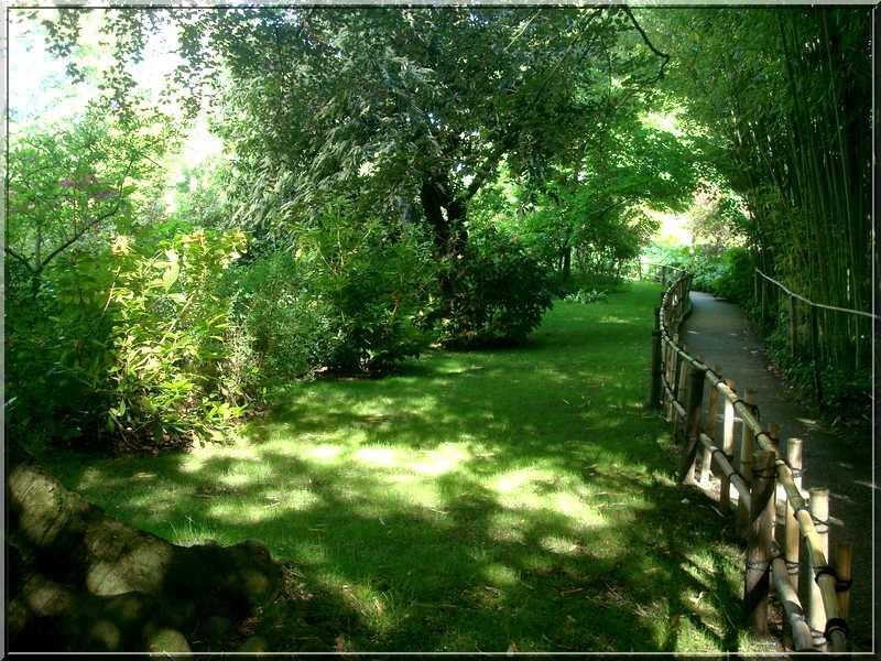 "Le ""Jardin d'Eau"" second jardin de Claude Monet 5411"
