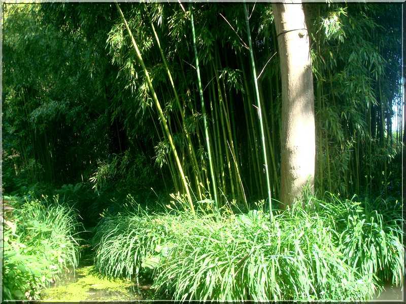 "Le ""Jardin d'Eau"" second jardin de Claude Monet 5511"