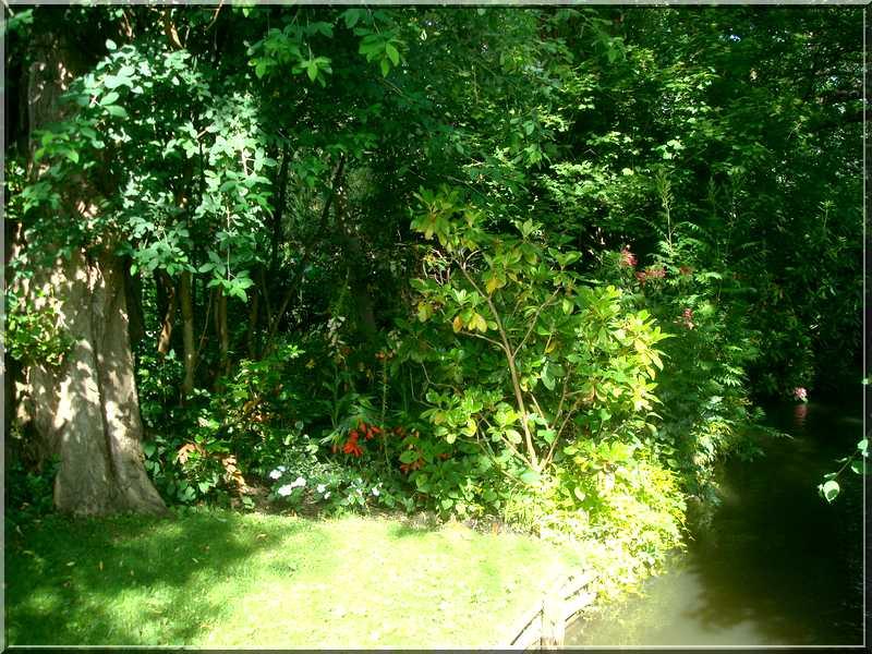 "Le ""Jardin d'Eau"" second jardin de Claude Monet 5711"
