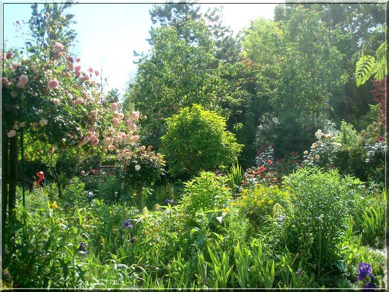 "Le ""Jardin d'Eau"" second jardin de Claude Monet 5811"