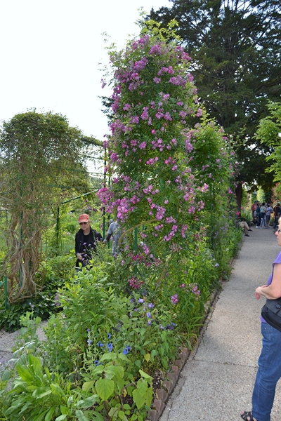 "Le ""Jardin d'Eau"" second jardin de Claude Monet 6011"