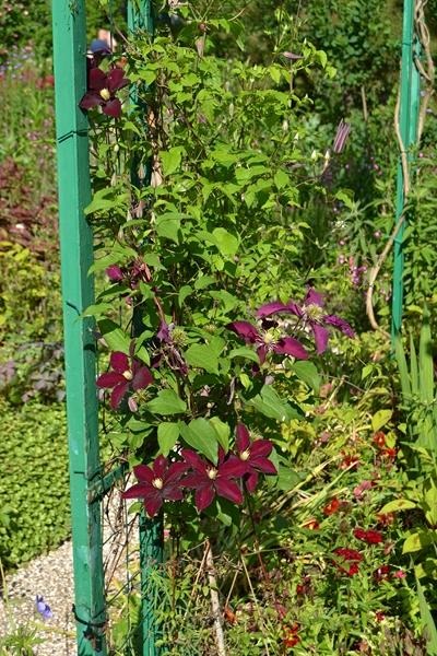 "Le ""Jardin d'Eau"" second jardin de Claude Monet 6212"