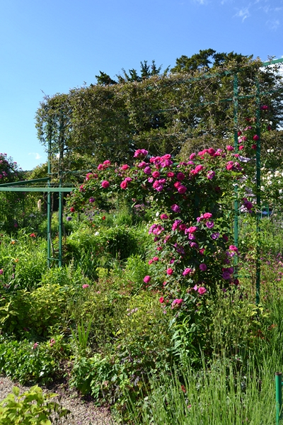 "Le ""Jardin d'Eau"" second jardin de Claude Monet 6311"
