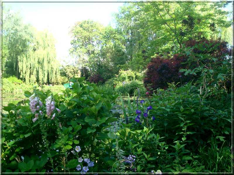 "Le ""Jardin d'Eau"" second jardin de Claude Monet 6411"